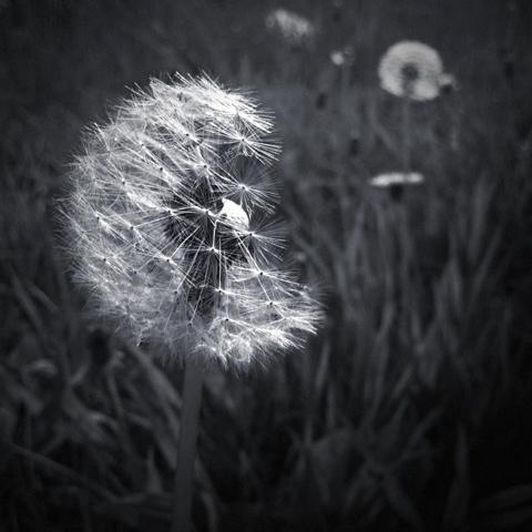 20120504-143625.jpg