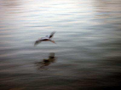 Artsy heron