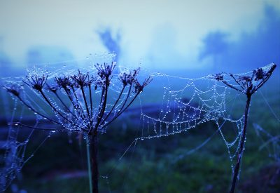 Misty morning in blue