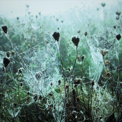 Wetwebbed