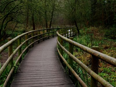 boardwalk in Wepre Park, Wales