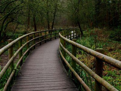 boardwalk in Wepre Park, Wales