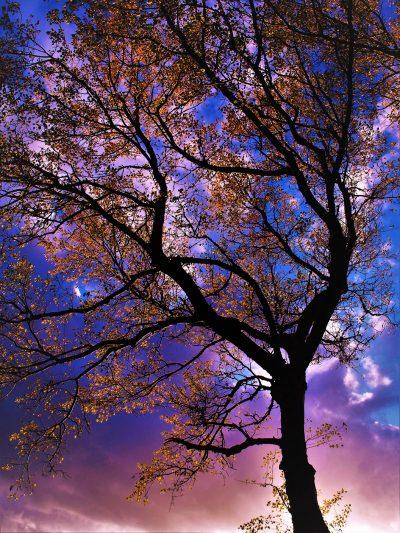 Oversaturated autumn